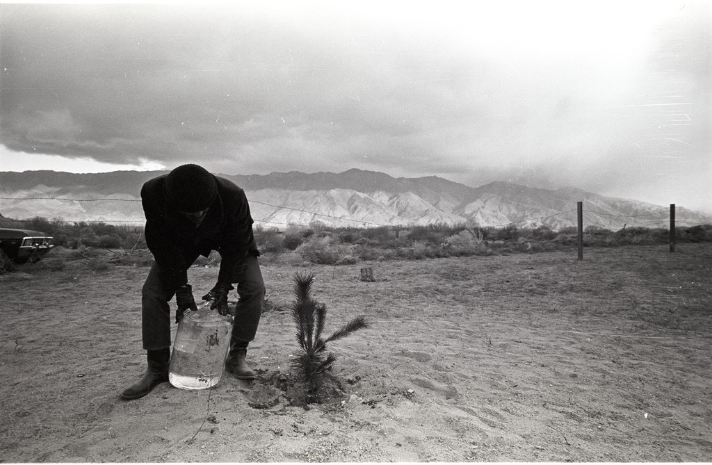 A man watering a small tree at Manzanar. He is bent over a large water jug and a mountain range and dramatic clouds are in the distant background behind him.