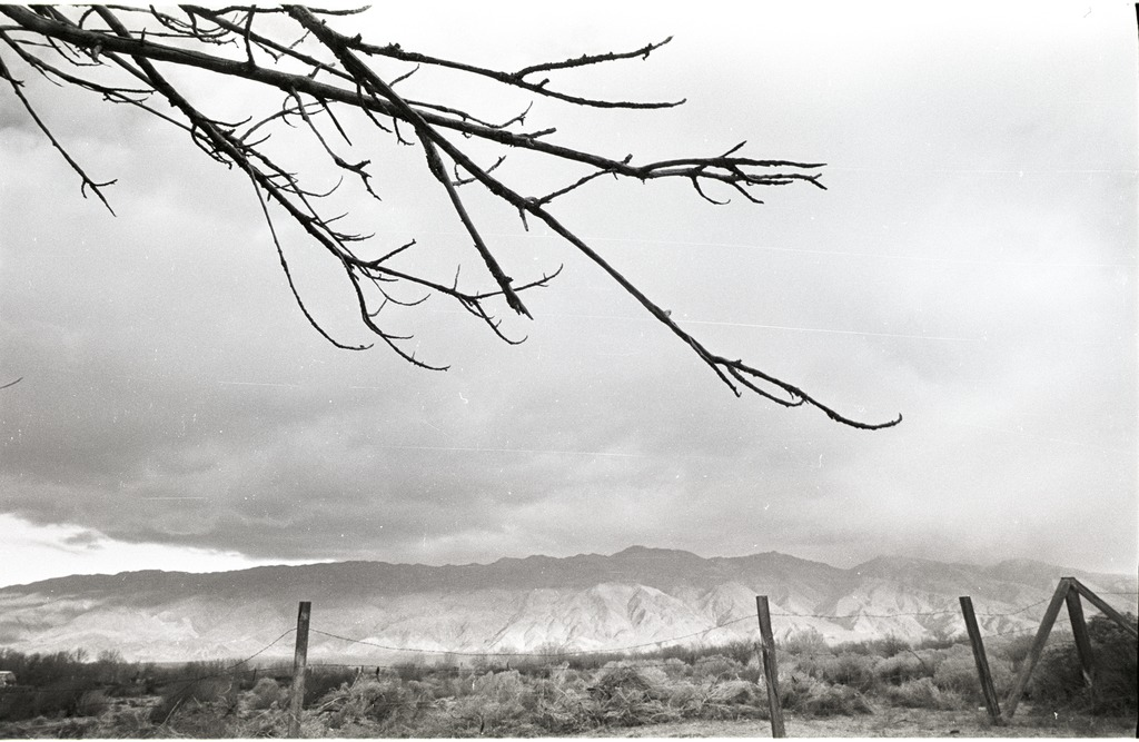 A view of the Inyo Mountains from Manzanar, with an overhanging tree branch and an old barbed wire fence in the foreground